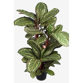 Maranta grøn/rød H 104 cm