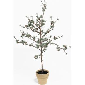 Lærketræ H100 cm