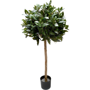 Laurbær træ H150 cm