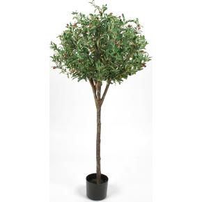 Oliventræ H140 cm