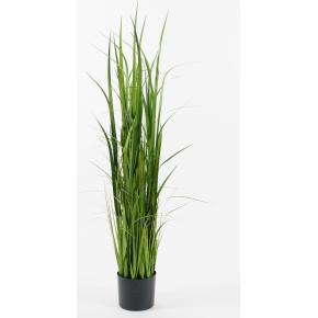 Græs i potte H135 cm