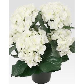 Hortensia 35 cm, hvid