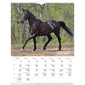 Mayland Vægkalender, 12 måneder, Heste
