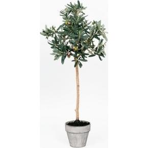 Oliventræ, grøn, 85cm