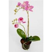 Orkide lilla H40 cm