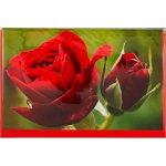 Blomsterkort Mini, Roser