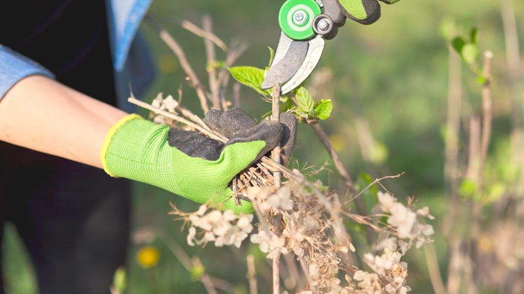 Person gør forårsrent i haven