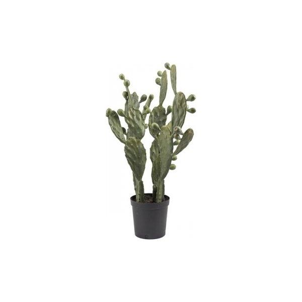 Kaktus, grøn, 85cm