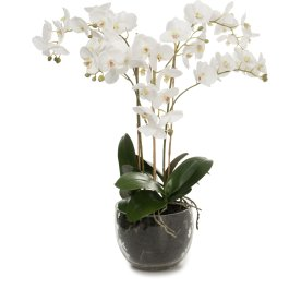 Orkide i glasskål hvid. H 70 cm