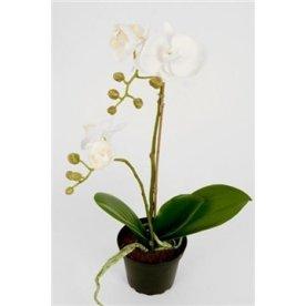 Orkide hvid H45 cm