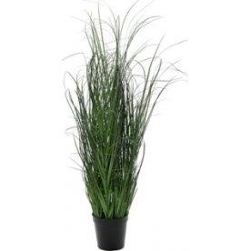 Græs i potte H90 cm