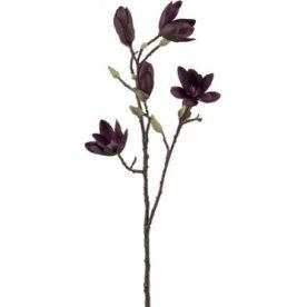 Magnolie kvist, Vinrød, 70cm