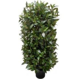Laurbærbusk, grøn, 110cm