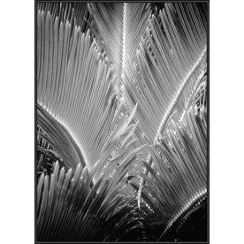 Plakat tryk, Tropic Tree, 70x100 cm
