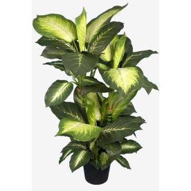 Dieffenbacia grøn/hvid H 104 cm