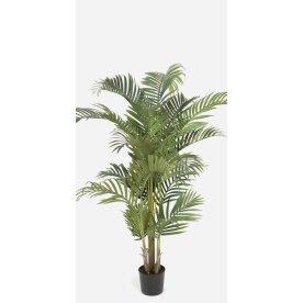 Kentia palme H110 cm