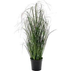 Græs i potte H70 cm