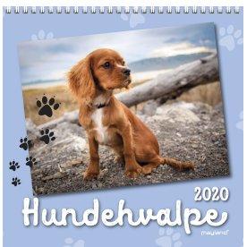 Mayland Vægkalender, 12 måneder, Hundehvalpe